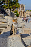 Katze in efeso ` s Bibliothek Lizenzfreie Stockbilder