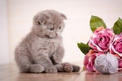 Katze Ein Kätzchen spielt Spiel mit Blumen Stockbild