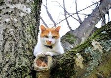 Katze in einem Baum Stockfotografie