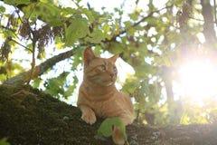 Katze in einem Baum Stockfoto