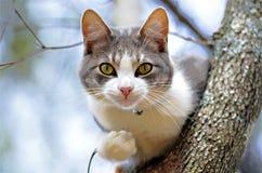 Katze in einem Baum, der heraus seiner Welt betrachtet Stockfotografie