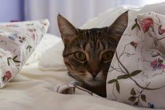 Katze in einem Bett Stockbilder