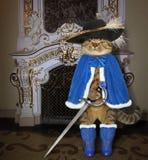 Katze in einem blauen Mantel nahe einem Kamin lizenzfreie stockfotos