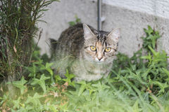 Katze in einem Garten Lizenzfreies Stockfoto