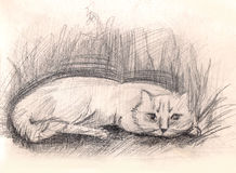 Katze in einem Gras skizze handgemalte Bleistift-Zeichnung Stockbild