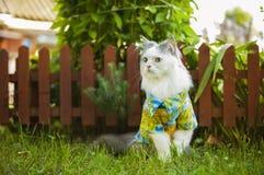 Katze in einem Hawaiihemd im Garten Lizenzfreie Stockfotos