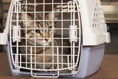 Katze in einem Käfig Stockbild