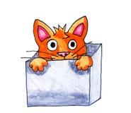 Katze in einem Kasten Stockfotografie