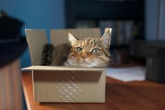 Katze in einem Kasten Lizenzfreie Stockfotografie