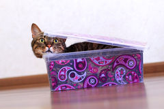 Katze in einem Kasten Lizenzfreie Stockbilder