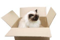 Katze in einem Kasten Lizenzfreies Stockfoto
