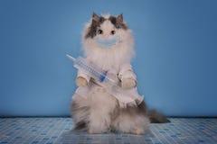 Katze in einem Klagendoktor sagt, wie man die Epidemie von infl beschäftigt stockbilder