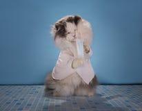 Katze in einem Klagendoktor sagt, wie man die Epidemie von infl beschäftigt stockfoto
