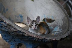 Katze in einem merkwürdigen konkreten Sitz, Bangkok Stockbild
