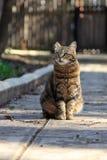 Katze in einem Park lizenzfreie stockfotos