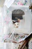 Katze in einem Plastikhaus Stockfotos