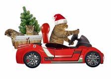 Katze in einem roten Auto 4 lizenzfreie stockfotos