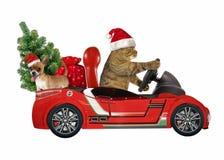 Katze in einem roten Auto mit Baum 1 stockfotografie