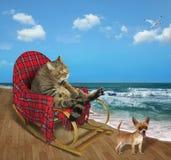 Katze in einem Schaukelstuhl auf dem Strand 2 lizenzfreies stockbild