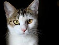 Katze in einem schwarzen Hintergrund Stockbilder
