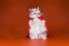 Katze in einem Teufelkostüm Stockfotografie