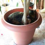 Katze in einem Topf stockfotos