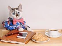 Katze in einem trinkenden Kaffee des Hemdes und der Fliege bei der Arbeit Stockfotografie
