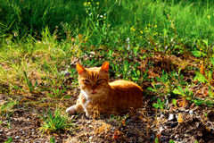 Katze in einem Wald Stockfotos