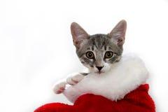 Katze in einem Weihnachtsstrumpf Lizenzfreie Stockfotos