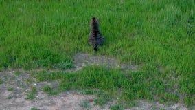 Katze in einer grünen Rasenfläche lizenzfreies stockbild