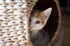 Katze in einer Hülse Lizenzfreies Stockfoto