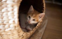 Katze in einer Hülse Stockbild