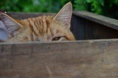 Katze in einer Holzkiste lizenzfreies stockfoto