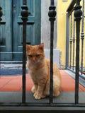Katze in einer italienischen Stadt stockbild