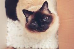 Katze in einer Pappschachtel Stockbild