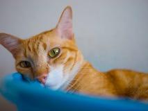 Katze in einer Schüssel Lizenzfreies Stockfoto
