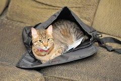 Katze in einer Schultasche Stockfotos