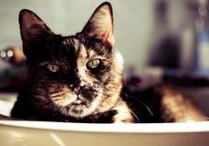 Katze in einer Wanne Lizenzfreies Stockfoto