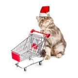 Katze in einer Weihnachtskappe mit einem Warenkorb auf Weiß Lizenzfreie Stockfotos