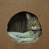 Katze eingewickelt oben im gemütlichen Kasten Lizenzfreie Stockbilder