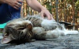 Katze enjoyd der menschlichen Liebkosung Lizenzfreie Stockbilder