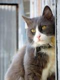 Katze es Lizenzfreies Stockbild