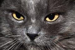 Katze fase Stockfoto