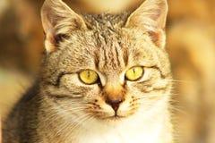 Katze.  (Felis silvestris catus) Lizenzfreie Stockfotos