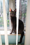 Katze am Fenster Stockbild