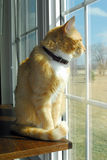 Katze am Fenster Lizenzfreies Stockfoto