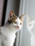 Katze am Fenster Lizenzfreie Stockbilder