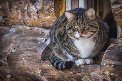 Katze am Fenster Stockfotografie