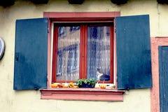 Katze am Fenster mit Halloween-Dekoration stockfoto