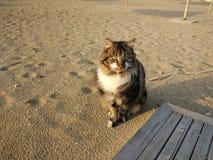 Katze in filo Fotografia Stock Libera da Diritti
